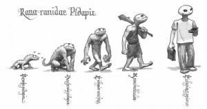 Pidapi V7 et Darwin: l'évolution de la grenouille Pidapi (Pidapi V7 : la cuvée des grenouilles 2013)