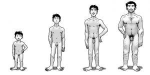 Evolution morphologique garçon