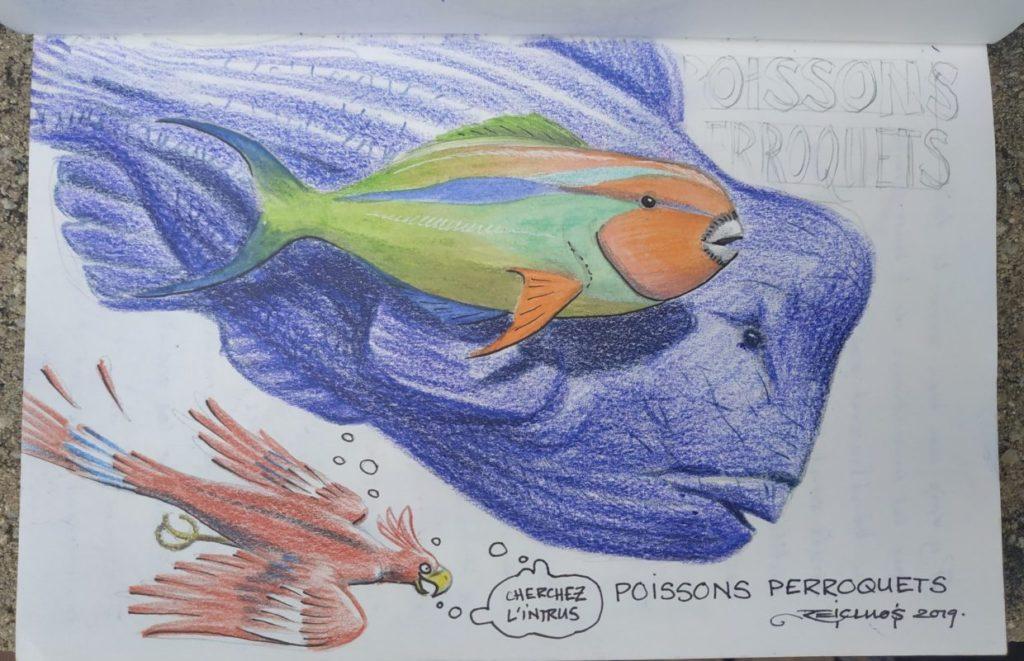 Carnet de vadrouille 2019 : Poissons clowns divers et variés aux îles Perhentian